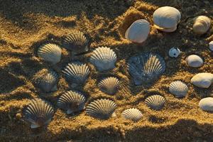 Shells on Bound Brook Island, Cape Cod, Wellfleet, Massachusetts by Jerry & Marcy Monkman
