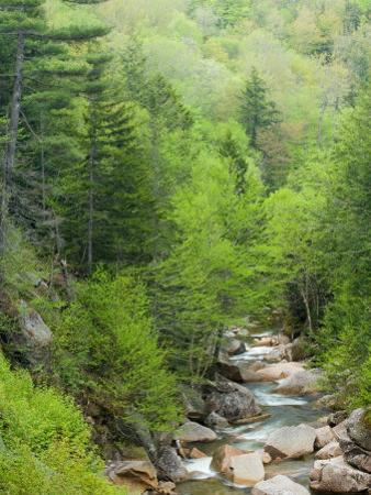 Spring on the Pemigewasset River, Flume Gorge, Franconia Notch State Park, New Hampshire, USA