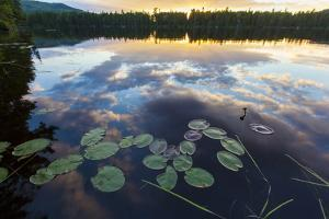 Water Lilies and Cloud Reflection on Lang Pond, Northern Forest, Maine by Jerry & Marcy Monkman