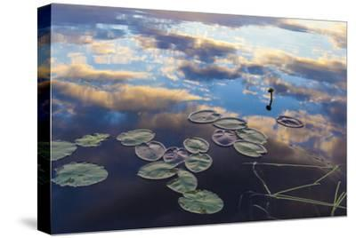 Water Lilies and Cloud Reflection on Lang Pond, Northern Forest, Maine