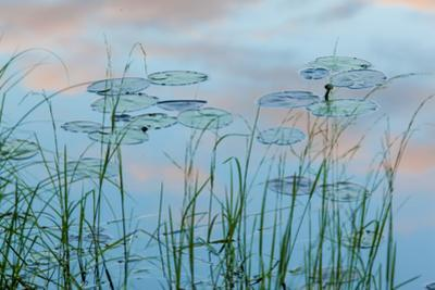 Water Lilies and Clouds, Lone Jack Pond, Northern Forest, Maine