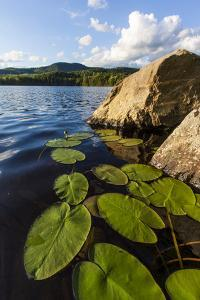 Water Lilies in Lang Pond in Maine's Northern Forest by Jerry & Marcy Monkman