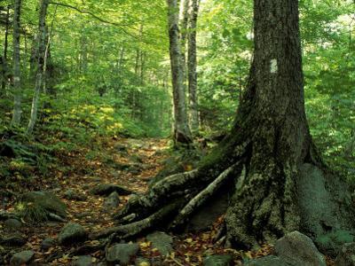White Blaze Marks Appalachian Trail, White Mountains, New Hampshire, USA