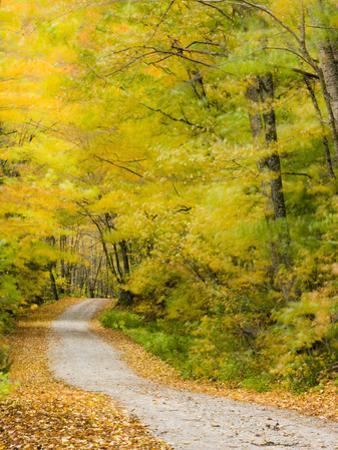 Wind Blurs the Fall Colors Along Kelly Stand Road, Vermont, Usa