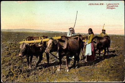 Jerusalem, Laboureurs, Ploughing, Pflügen, Landwirtschaft, Ochsenpflug--Giclee Print
