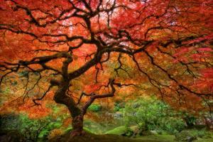 Japenese Garden, Portland by Jesse Estes