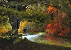 Autumn Reverie by Jessica Jenney