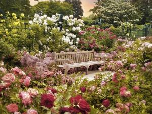The Rose Garden by Jessica Jenney