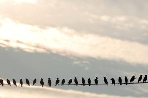 Birds on a Wire by Jessica Kiser