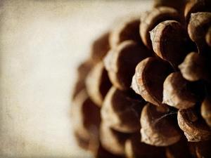 Pine Cone by Jessica Rogers