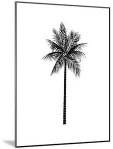 Black Palm by Jetty Printables