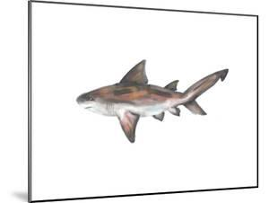 Bull Shark Single Painting by Jetty Printables
