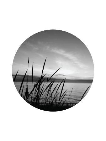 jetty-printables-dune-grass-circle