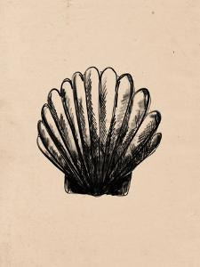 Illustrated Sea Shell 3 by Jetty Printables