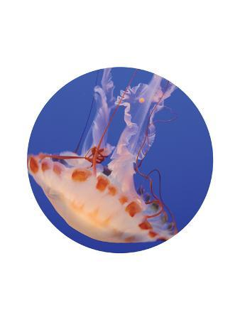 jetty-printables-jelly-3-circle