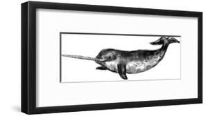 Narwhal Illustration by Jetty Printables