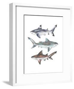 Painted Shark Trio 2 by Jetty Printables