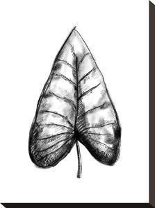 Palm Leaf Illustration by Jetty Printables