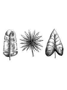 Palm Leaf Trio by Jetty Printables