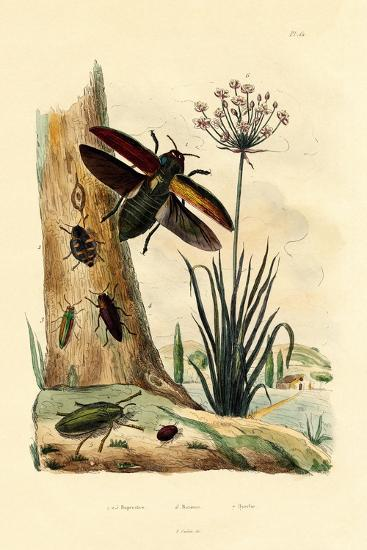 Jewel Beetles, 1833-39--Giclee Print