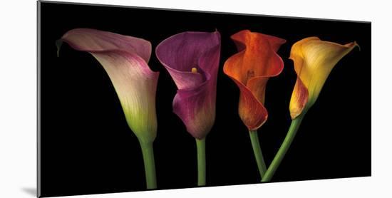 Jewel Calla Lilies-Assaf Frank-Mounted Photographic Print