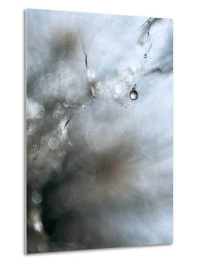 Jewel-Ursula Abresch-Metal Print