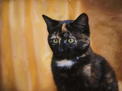 Jeweled Eyes Tortoiseshell Kitten-Jai Johnson-Giclee Print