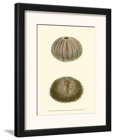 Jewels of the Sea IV-Frederick P^ Nodder-Framed Art Print