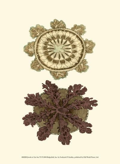 Jewels of the Sea VI-Frederick P^ Nodder-Art Print