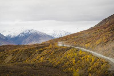Camper buses driving into the heart of Denali National Park, Alaska, United States of America, Nort