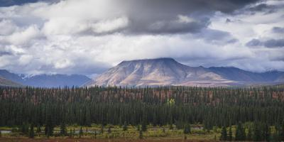 Mountain and forest landscape in Denali National Park, Alaska, United States of America, North Amer