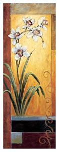 Orchid by Jill Deveraux