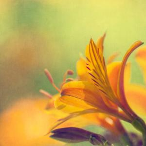 Golden Flowers by Jill Ferry