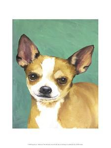 Dog Portrait, Chihuahua by Jill Sands