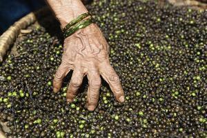 A Woman Mixes Her Peppercorns in the Market by Jill Schneider