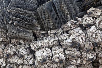 Bags of Oyster Shells by Jill Schneider