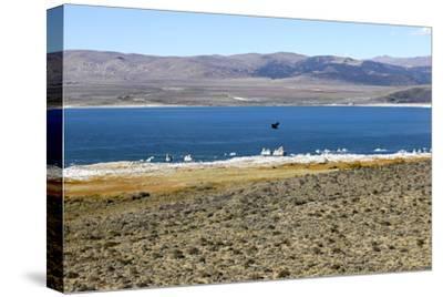 View of Mono Lake in California, USA