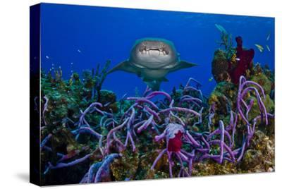A Nurse Shark Swimming over a Reef