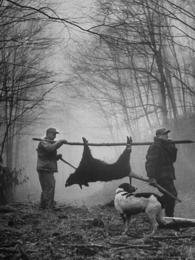 Jim Atchley and Dr. Ray Atchley Carrying Boar That They Killed-Ralph Crane-Photographic Print