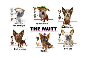 The Mutt by Jim Baldwin