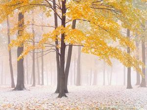 Early Autumn Snow by Jim Becia
