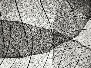 Leaf Designs II BW by Jim Christensen