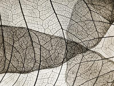 Leaf Designs II Sepia by Jim Christensen