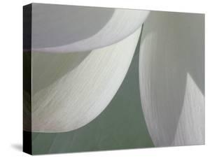 Lotus Detail I by Jim Christensen