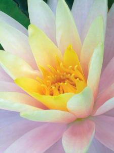 Water Lily by Jim Christensen