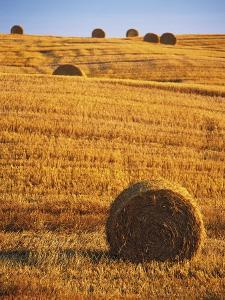 Harvested Fields of Hay by Jim Craigmyle