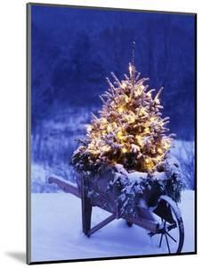 Lighted Christmas Tree in Wheelbarrow by Jim Craigmyle
