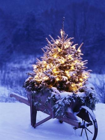 Lighted Christmas Tree in Wheelbarrow