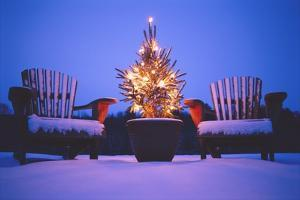 Small Christmas Tree Outdoors by Jim Craigmyle