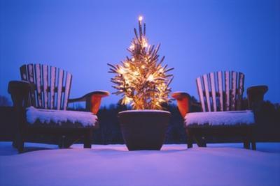 Small Christmas Tree Outdoors